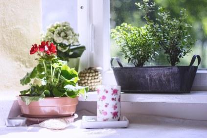 Wintergarten und Zimmer neu (7 von 17)